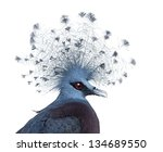 Head Of Victoria Crowned Pigeon ...