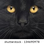 Close Up Of A Black Cat