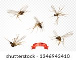 insect mosquito  gnat and pest... | Shutterstock .eps vector #1346943410