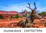 red rock canyon desert tree... | Shutterstock . vector #1347027596
