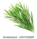 fresh tea tree isolated on... | Shutterstock . vector #1347102809