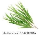 fresh tea tree isolated on... | Shutterstock . vector #1347103316