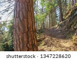 walk along the spring trail in... | Shutterstock . vector #1347228620