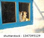 kittens in the window  lit by... | Shutterstock . vector #1347395129