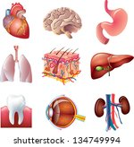 human body parts detailed vector set