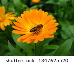 Beautiful Yellow Flower In The...