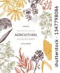 agricultural plants design.... | Shutterstock .eps vector #1347798086