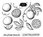 Passion Fruit Vector Drawing...