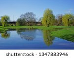 reflections of weeping willows  ... | Shutterstock . vector #1347883946