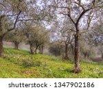early spring morning  still... | Shutterstock . vector #1347902186