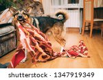 funny domestic dog tearing... | Shutterstock . vector #1347919349