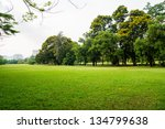 green grass field in big city... | Shutterstock . vector #134799638