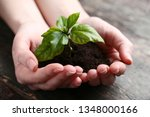 female hands holding young...   Shutterstock . vector #1348000166