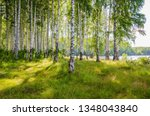 birch grove on the river in the ... | Shutterstock . vector #1348043840