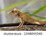 forest crested lizard or... | Shutterstock . vector #1348045340