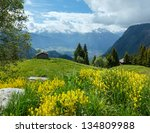 yellow wild flowers on summer... | Shutterstock . vector #134809988
