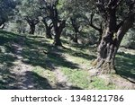 view of the wood of tuviois | Shutterstock . vector #1348121786