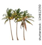 Three Coconut Palm Trees...