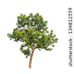 Neem Plant  Azadirachta Indica  ...