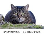 a small cute cat just before... | Shutterstock . vector #1348301426