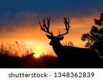 Small photo of A non-typical mule deer buck against an evening sunset.