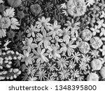 black and white flower...   Shutterstock . vector #1348395800