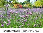 close up of verbena flowers...   Shutterstock . vector #1348447769