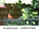 red male northern cardinal... | Shutterstock . vector #1348479386