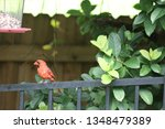 red male northern cardinal... | Shutterstock . vector #1348479389