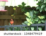 red male northern cardinal... | Shutterstock . vector #1348479419