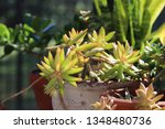 pretty green succulent plants...   Shutterstock . vector #1348480736