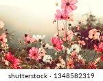 Pink Flowers Cosmos Bloom...
