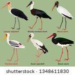 Cute Bird Vector Illustration...
