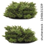 Two Thuja Bushes Isolated On A...