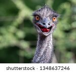 Bird Ostrich With Funny Look