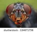 An Extreme Close Up Of A Fly...