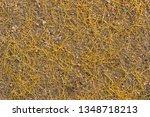 abstract natural texture   Shutterstock . vector #1348718213