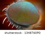 Macro Fly Compound Eye Surface...