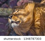 close up  leo shakes mane.... | Shutterstock . vector #1348787303