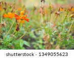 refreshing nature picture used... | Shutterstock . vector #1349055623