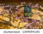 Beautiful Purple Wisteria...