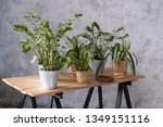 potted plants on a wooden table ... | Shutterstock . vector #1349151116