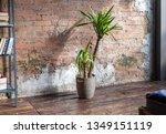 palm in a wicker pot on the... | Shutterstock . vector #1349151119