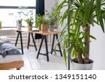 potted plants on a wooden table ... | Shutterstock . vector #1349151140