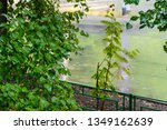 green lilac bush with raindrops ... | Shutterstock . vector #1349162639