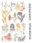 hand drawn agricultural plants... | Shutterstock .eps vector #1349195540