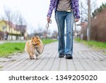 Stock photo a woman leads her dog on a leash 1349205020
