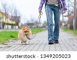Stock photo a woman leads her dog on a leash 1349205023