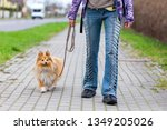 Stock photo a woman leads her dog on a leash 1349205026