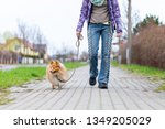 Stock photo a woman leads her dog on a leash 1349205029